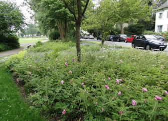 area of wildflower in the city