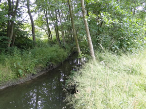 Stream, lined with trees and semi-high flora