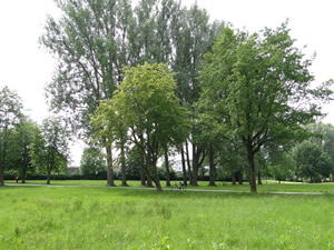 in front: lawn, in the background:some trees